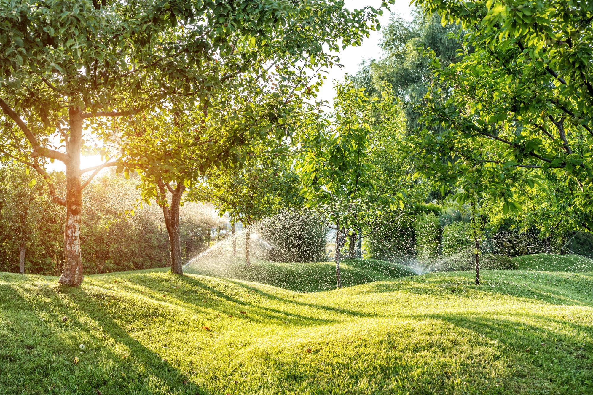 Baumpflege – Dürreschäden vermeiden
