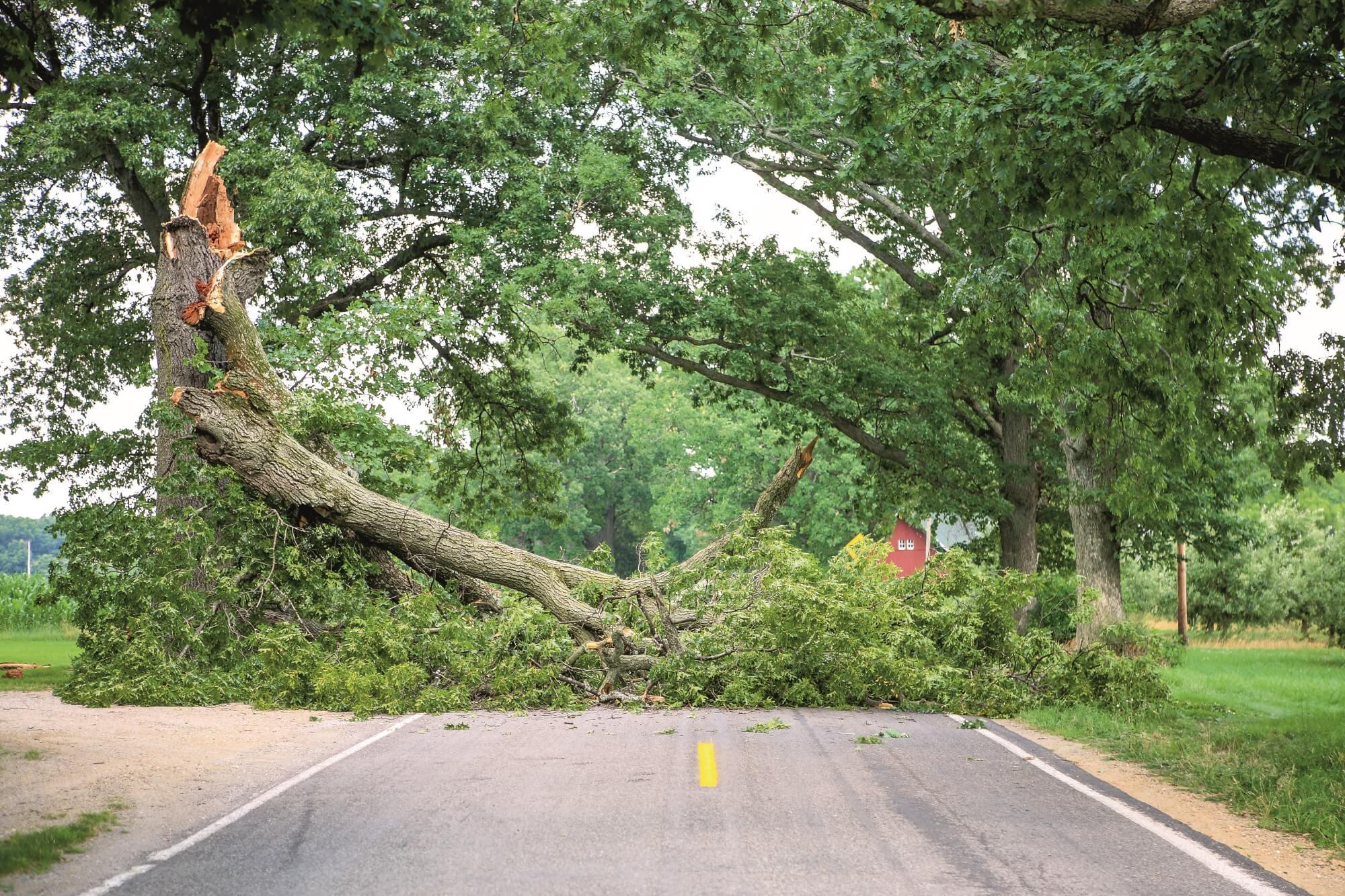Neue Baumkontrollrichtlinie 2020 – Stets im Blick: Bäume